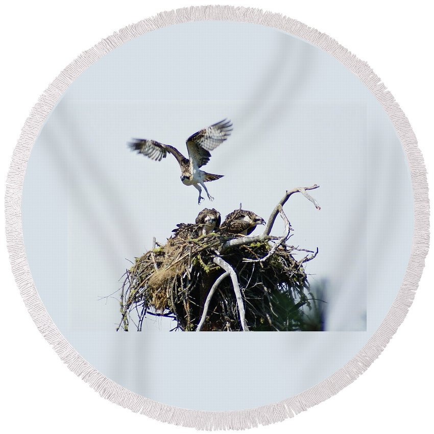 Birds Round Beach Towel featuring the photograph Osprey In Flight Over Nest by Ben Upham III