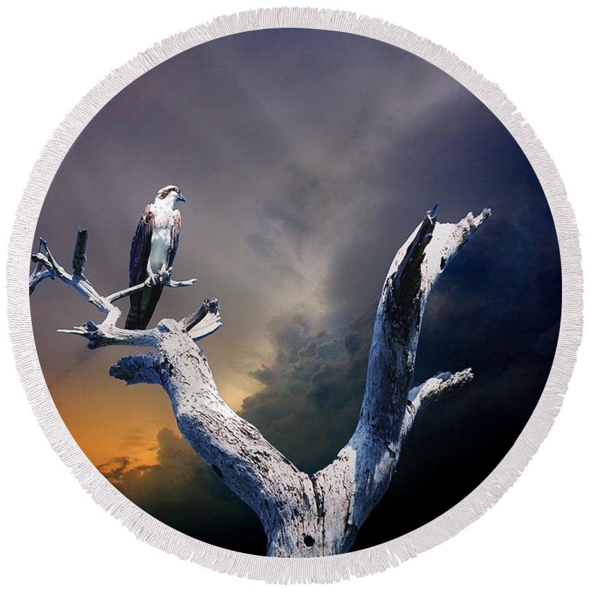 Osprey Round Beach Towel featuring the photograph Osprey by Mal Bray