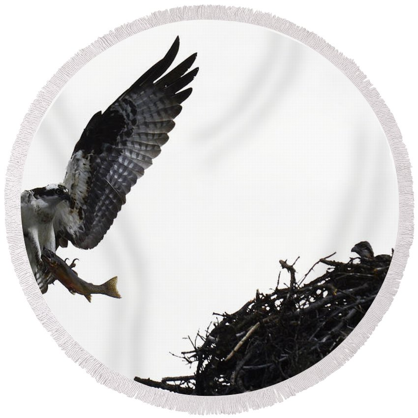 Osprey Round Beach Towel featuring the photograph Osprey With Sushi by Bob Christopher