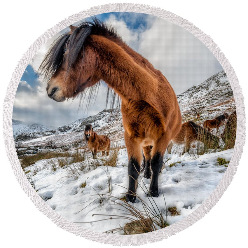 Feral Horse Round Beach Towel featuring the photograph Over There by Adrian Evans
