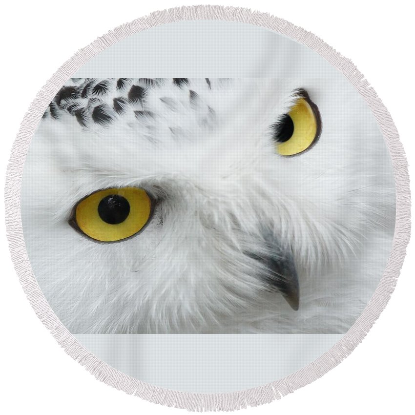 Wise Round Beach Towel featuring the photograph Owl by FL collection
