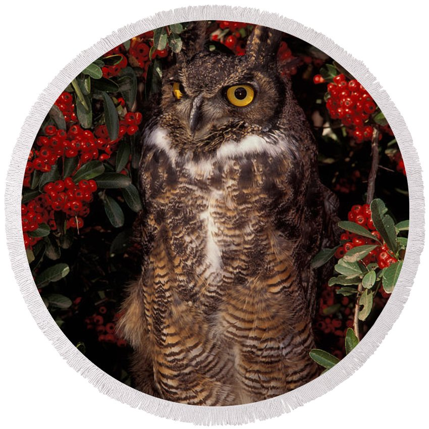 Fauna Round Beach Towel featuring the photograph Owl by Ron Sanford