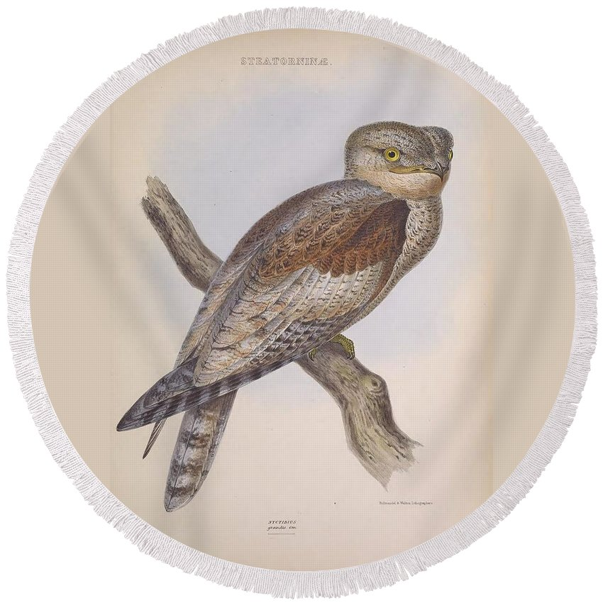 Audubon Round Beach Towel featuring the painting Owl Steanorninae by Philip Ralley
