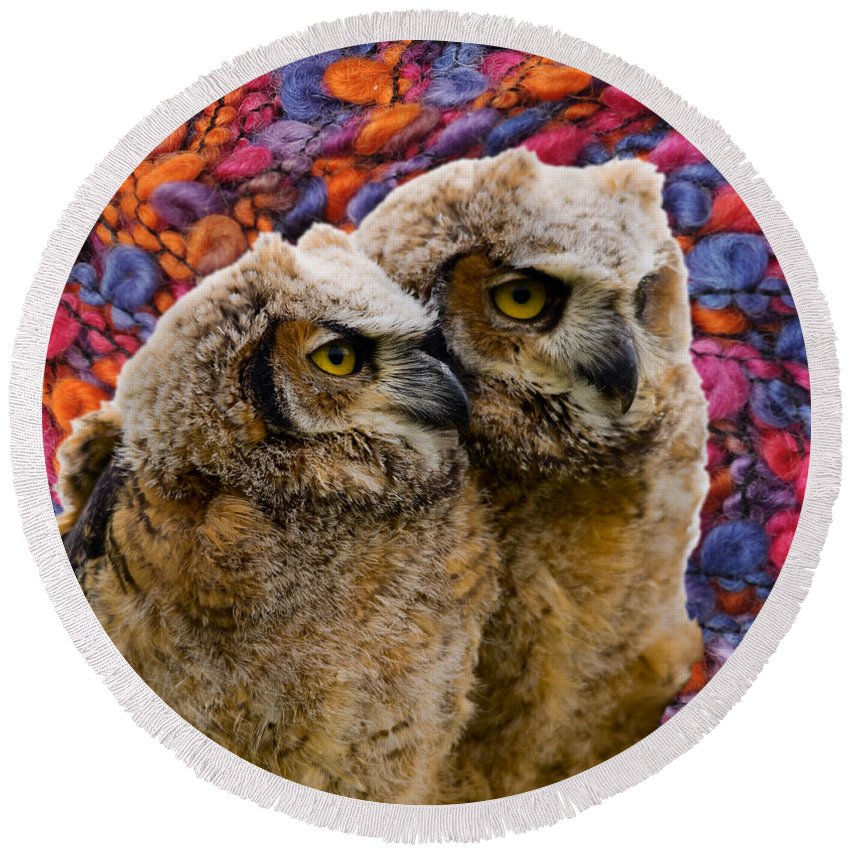 Great Round Beach Towel featuring the photograph Owlets In Color by Les Palenik