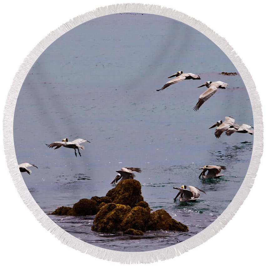 Bird Round Beach Towel featuring the photograph Pacific Landing by Melinda Ledsome