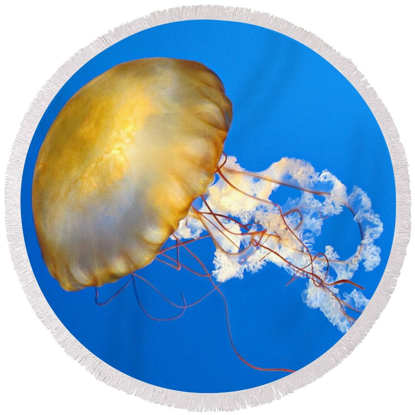 Pacific Sea Nettle Round Beach Towel featuring the photograph Pacific Sea Nettle by Dave Mills