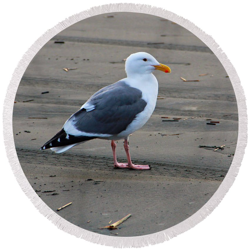 Ocean Round Beach Towel featuring the photograph Pacific Seagull by Jeanette C Landstrom