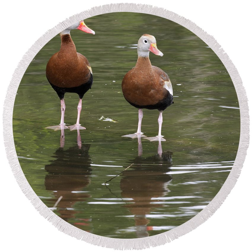 Black Round Beach Towel featuring the photograph Pair Black-bellied Whistling-ducks by Gary Langley