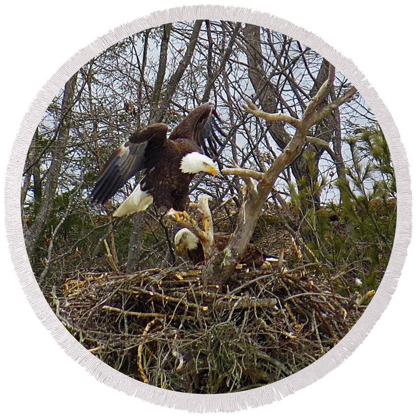 Bald Eagles Round Beach Towel featuring the photograph Pair Of Bald Eagles At Their Nest by MTBobbins Photography