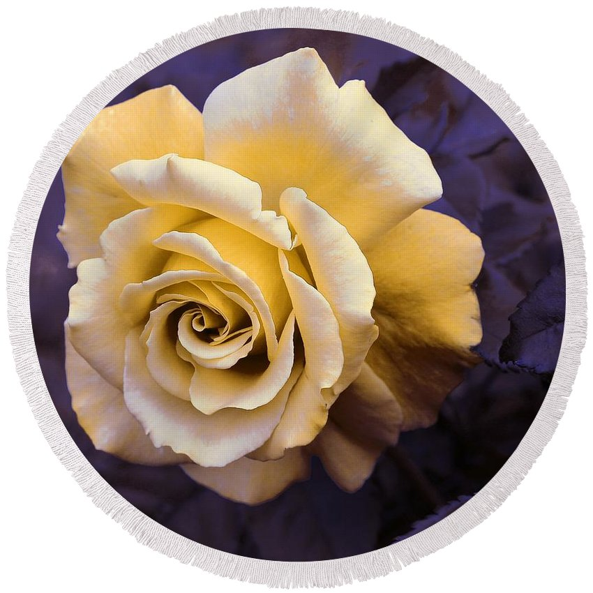 Pale Yellow Rose Round Beach Towel featuring the photograph Pale Yellow Rose by Barbara Griffin