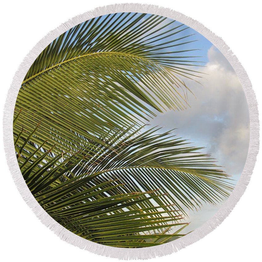 Beach Round Beach Towel featuring the photograph Palm Close Up 3 by Anita Burgermeister