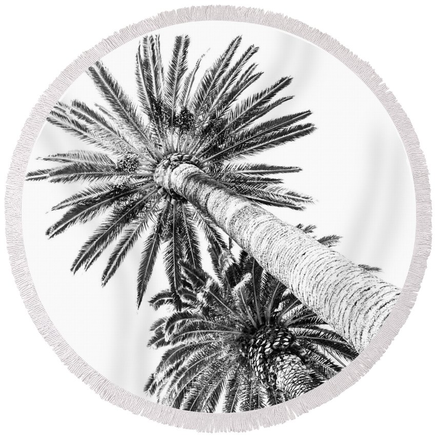 Square Round Beach Towel featuring the digital art Palm Tree White by Alessandro Martinetti