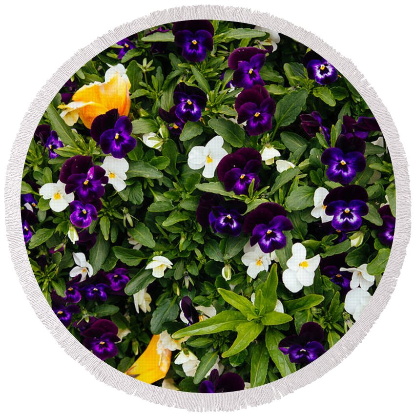Pansies Round Beach Towel featuring the photograph Pansies by Pati Photography