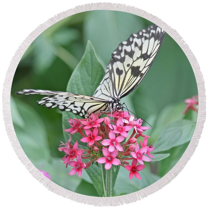 Butterfly Round Beach Towel featuring the photograph Paper Kite Butterfly - 2 by Kim Hojnacki