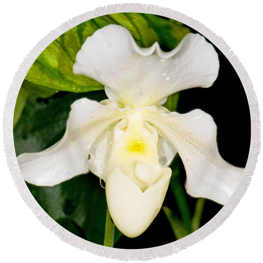 Plant Round Beach Towel featuring the photograph Paphiopedilum Orchid by Millard H. Sharp