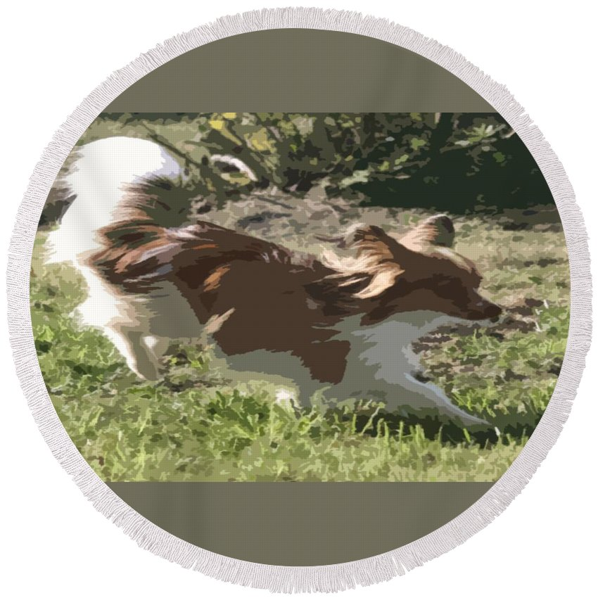 Dog Round Beach Towel featuring the photograph Papillon In Flight by Donna G Smith