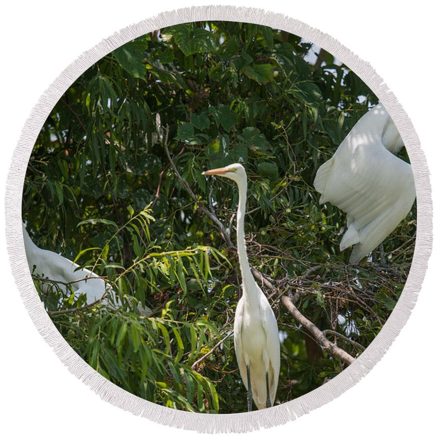 Egret Round Beach Towel featuring the photograph Parents Protecting The Nest by Dale Powell
