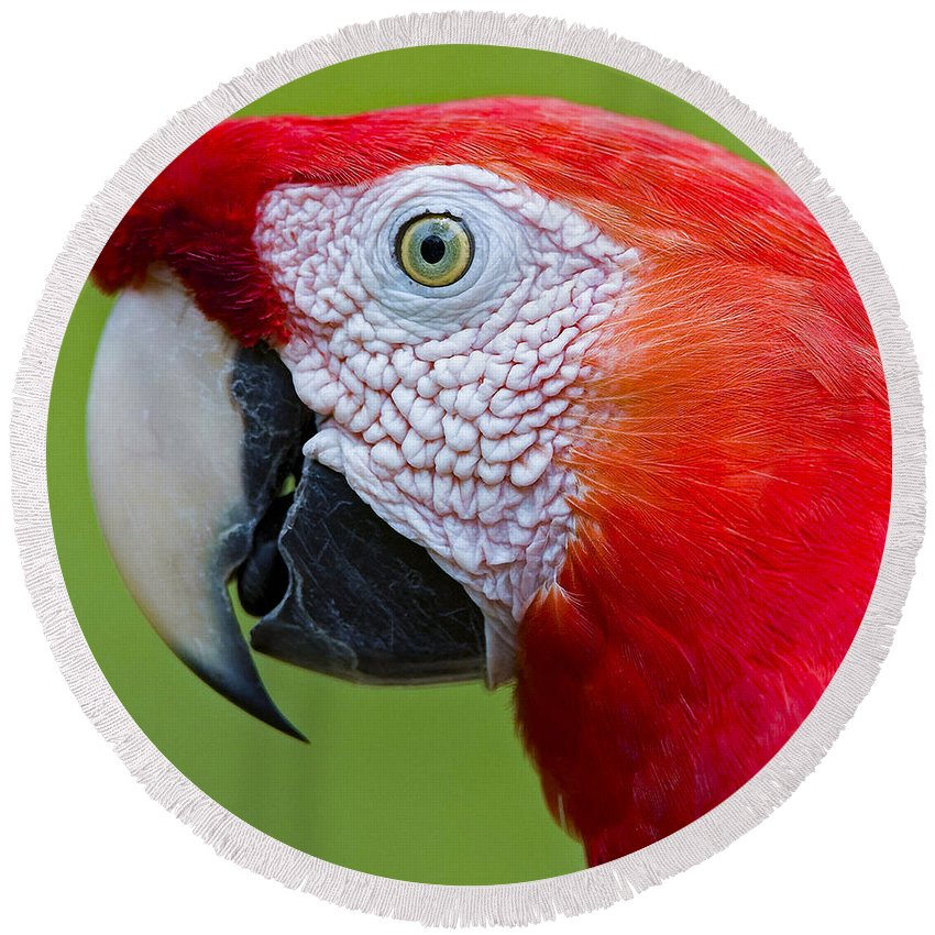 Beak Round Beach Towel featuring the photograph Parrot 35 by Ingrid Smith-Johnsen