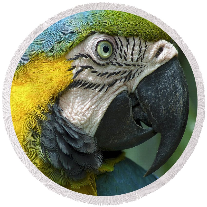 Beak Round Beach Towel featuring the photograph Parrot 9 by Ingrid Smith-Johnsen