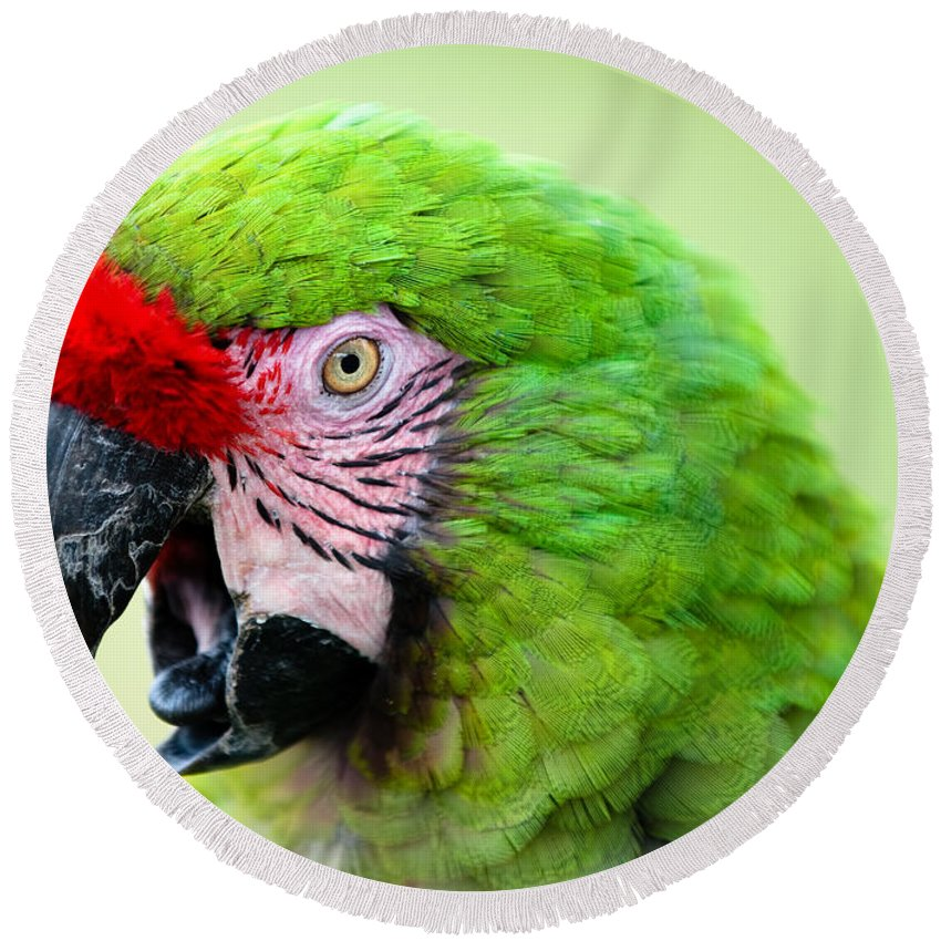Parrot Round Beach Towel featuring the photograph Parrot by Sebastian Musial