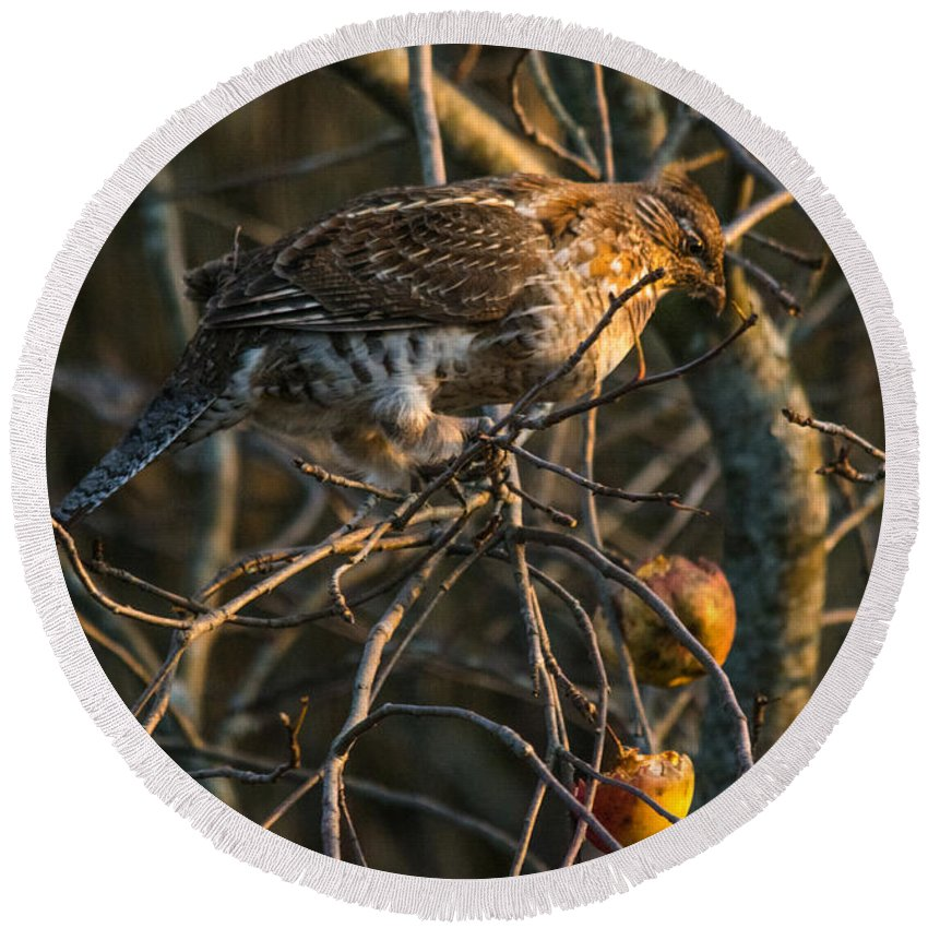 Round Beach Towel featuring the photograph Partridge In An Apple Tree by Cheryl Baxter