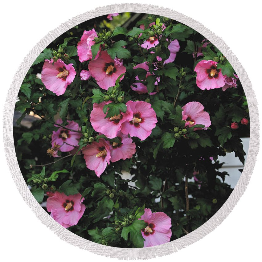 Pink Round Beach Towel featuring the photograph Party In The Neighborhood by William Norton