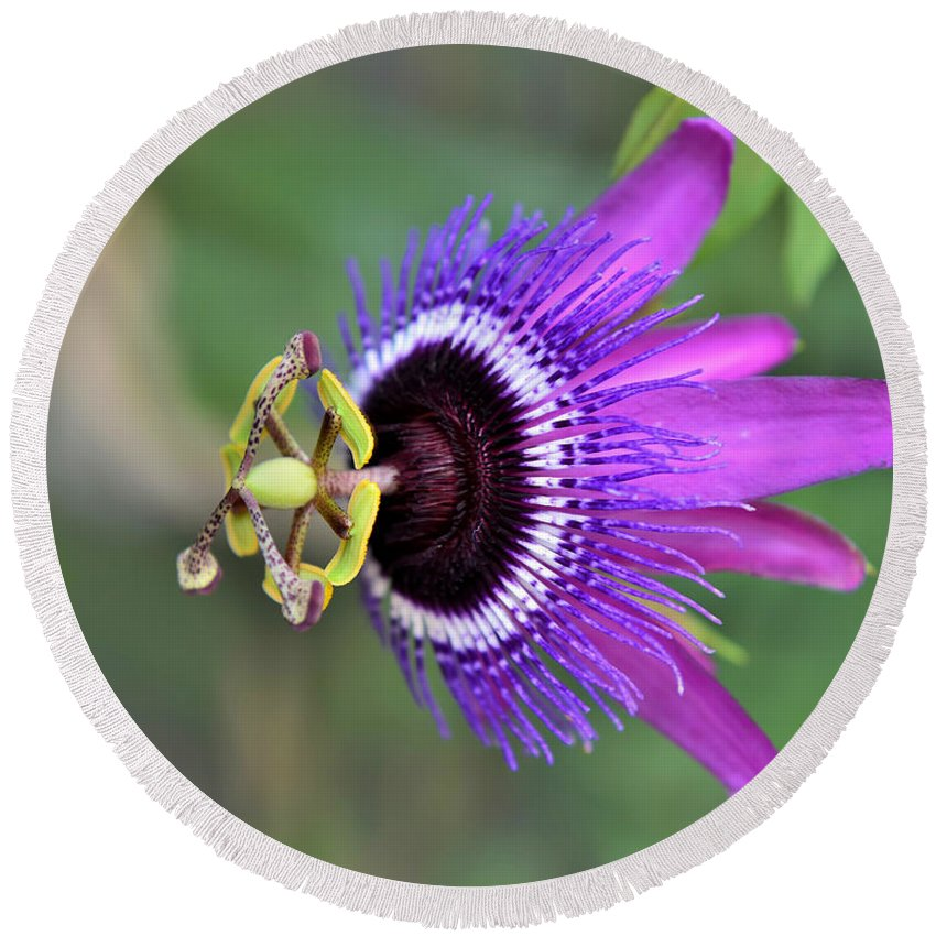 Passiflora Round Beach Towel featuring the photograph Passiflora Lavender Lady by Olga Hamilton