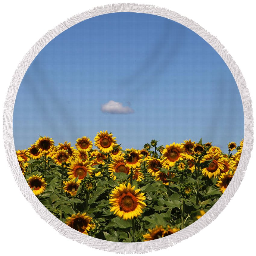 Sunflower Round Beach Towel featuring the photograph Passing By by Amanda Barcon