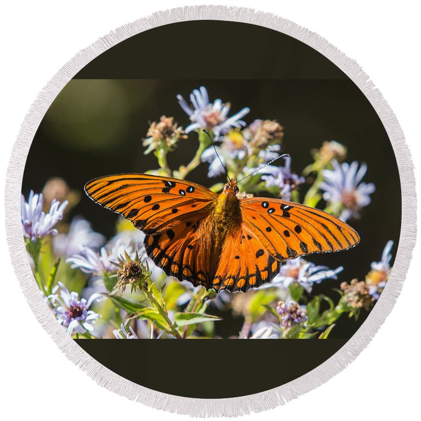 Gulf Fritillary Round Beach Towel featuring the photograph Passion Butterfly by John Haldane