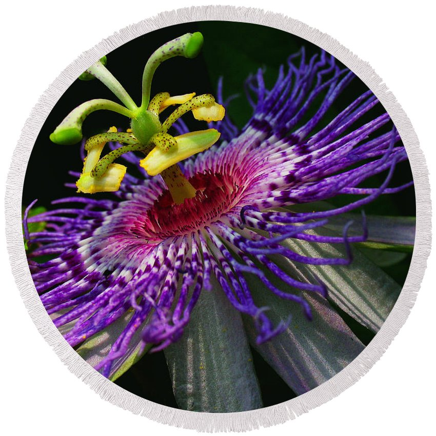 Passion Round Beach Towel featuring the photograph Passion Flower by Douglas Stucky