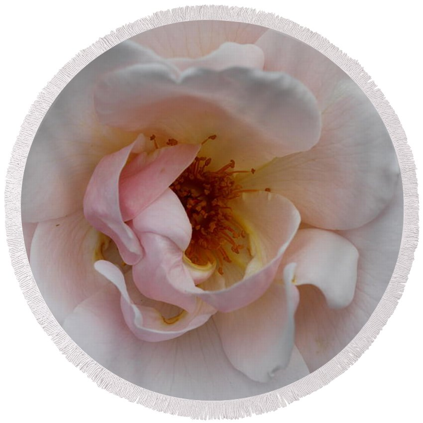 Pink Rose Round Beach Towel featuring the photograph Pastel Pink Rose by Christiane Schulze Art And Photography