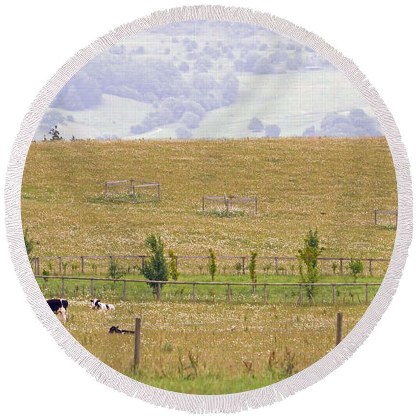 Grazing Round Beach Towel featuring the photograph Pastoral by Keith Armstrong