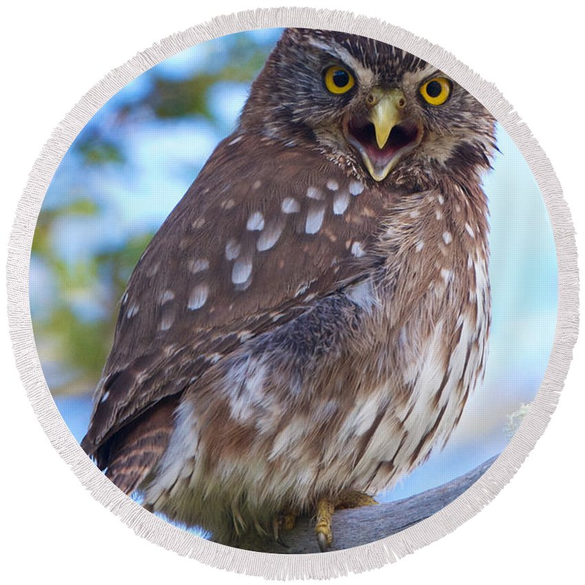 Chile Round Beach Towel featuring the photograph Patagonia Pygmy Owl by David Beebe