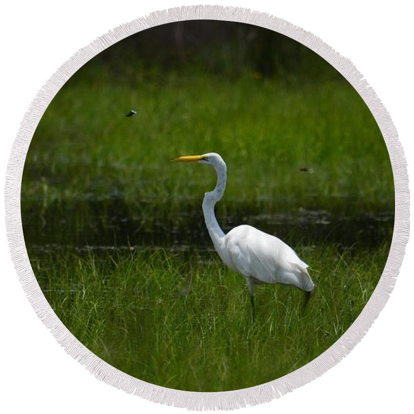 Patiences - Egret Round Beach Towel featuring the photograph Patience - Egret by Maria Urso
