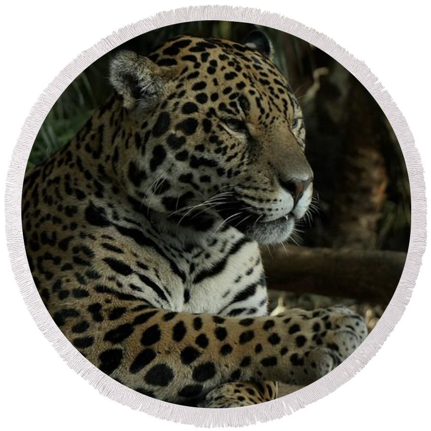 Big Cat Round Beach Towel featuring the photograph Paws Of A Jaguar by Mickey At Rawshutterbug