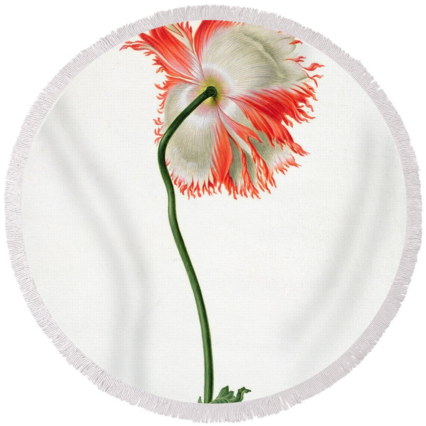 Poppy Round Beach Towel featuring the painting Field Poppy by Pieter Withoos