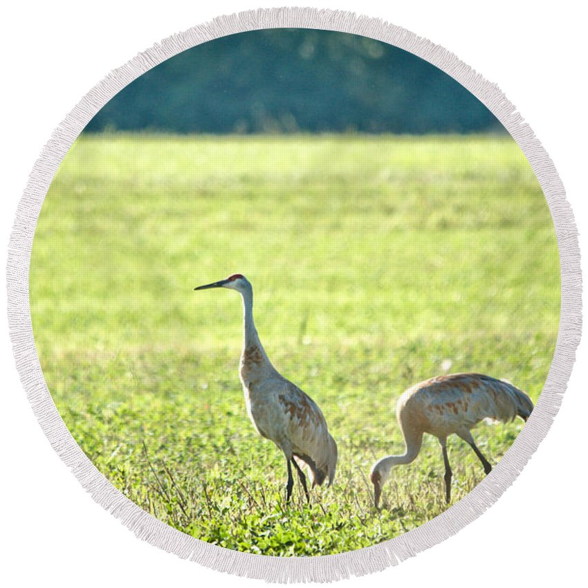Sandhill Cranes Round Beach Towel featuring the photograph Peaceful Morning by Cheryl Baxter