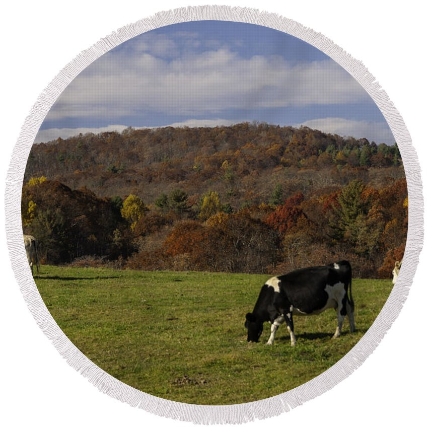 Animals Round Beach Towel featuring the photograph Peaceful Pasture by Lynn Bauer