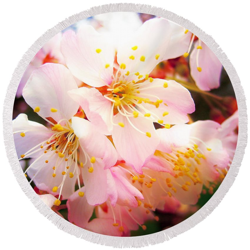 Blossom Round Beach Towel featuring the photograph Pale Peach Blossom by Nina Ficur Feenan