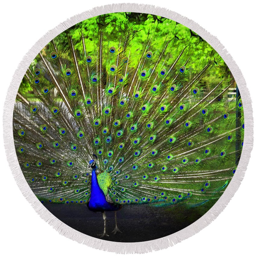 Peacock Round Beach Towel featuring the photograph Peacock Beauty 3 by Madeline Ellis