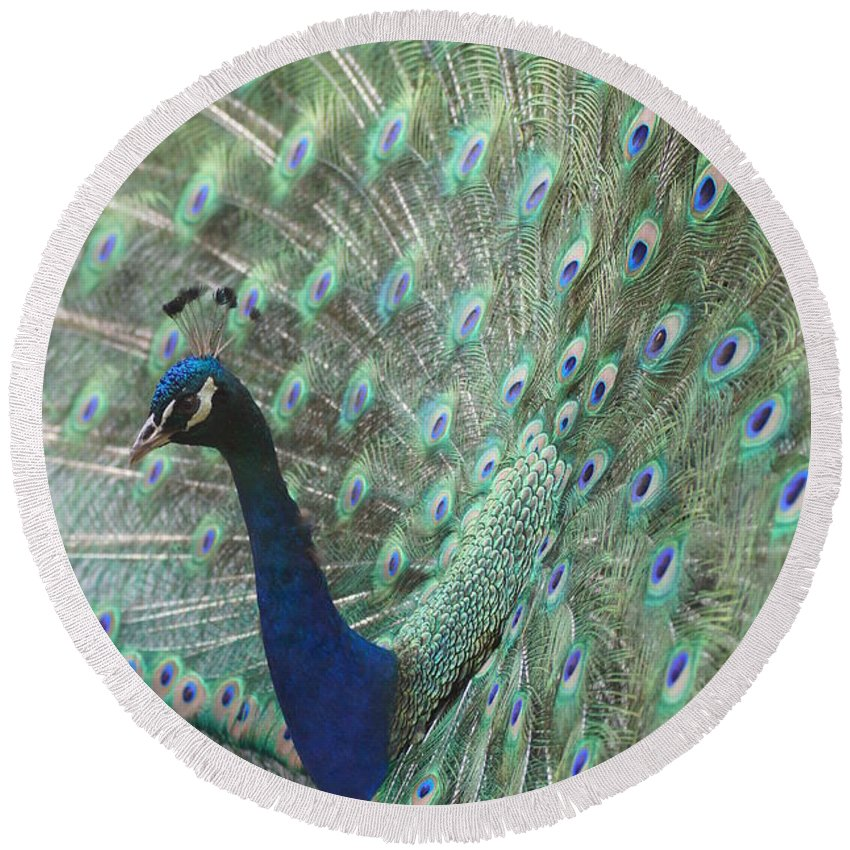 Peacocks Round Beach Towel featuring the photograph Peacock by Jeffery L Bowers