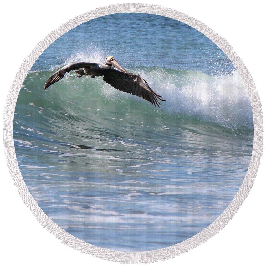 Ocean Round Beach Towel featuring the photograph Pelican At Playa Grande by Lorraine Baum
