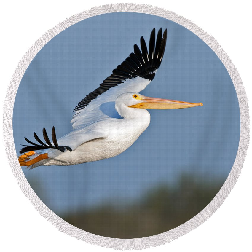 Pelican Round Beach Towel featuring the photograph Pelican Flight by Gary Langley
