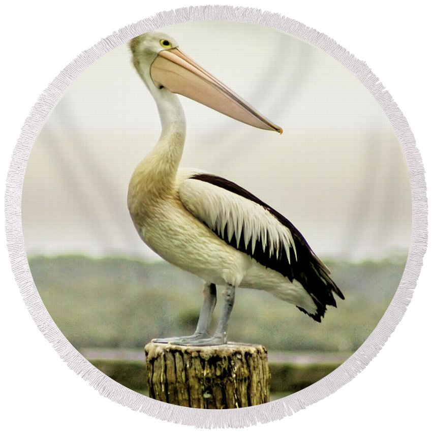 Animlas Round Beach Towel featuring the photograph Pelican Poise by Holly Kempe