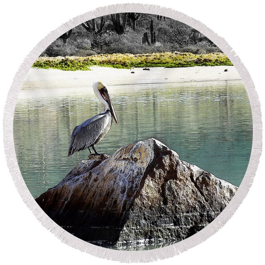 Pelican Round Beach Towel featuring the photograph Pelican Rock by Anne Mott