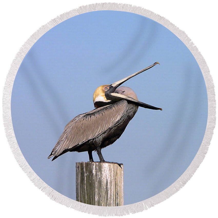 Pelican Round Beach Towel featuring the photograph Pelican Yawn by Al Powell Photography USA