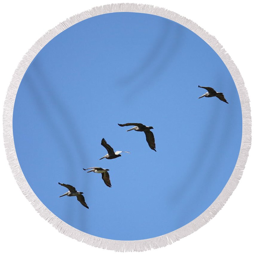 Pelicans Round Beach Towel featuring the photograph Pelicans All In A Row by Carol Groenen
