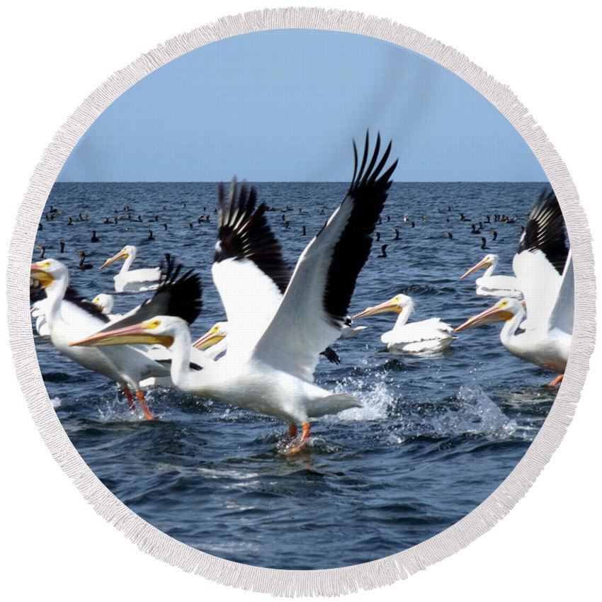 Pelicans Round Beach Towel featuring the photograph Pelicans Taking Flight by Marilyn Holkham