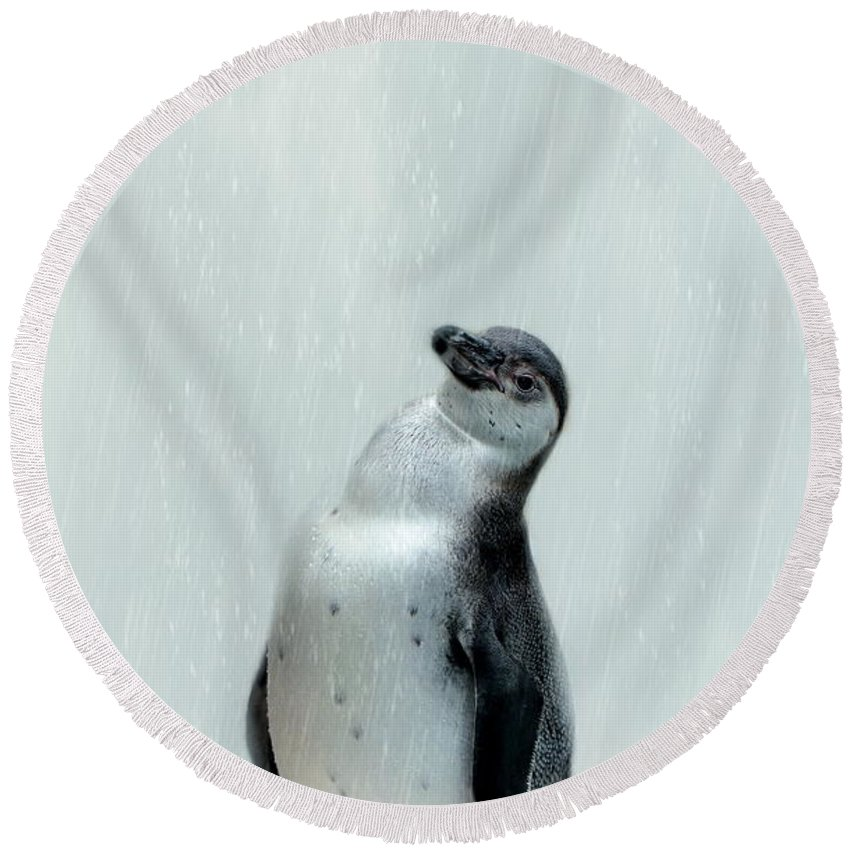 Penguin Round Beach Towel featuring the photograph Penguin by Heike Hultsch