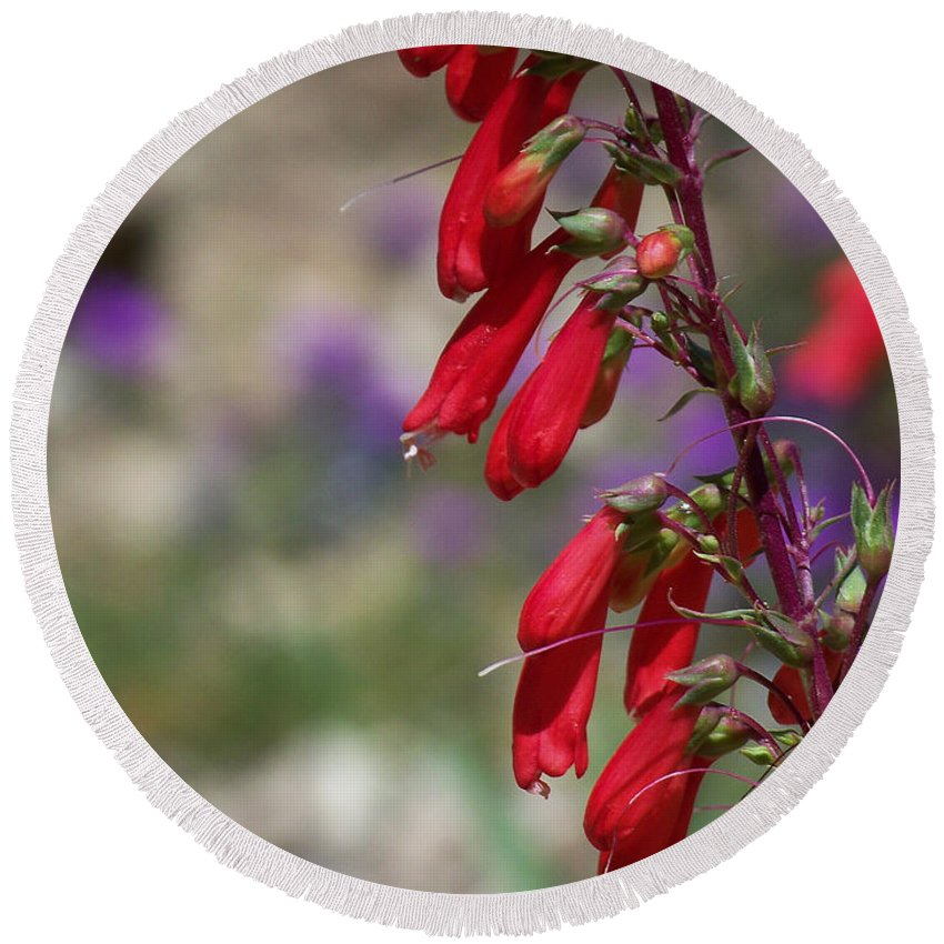 Flowers Round Beach Towel featuring the photograph Penstemon by Kathy McClure